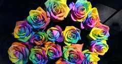 Rainbow roses in support of LGBTQ+ youth homeless